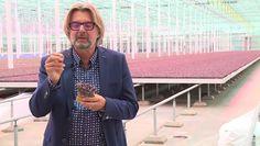 Rob Baan bij RTL7- ''Deze kas is gebouwd op complete duurzaamheid'' | Koppert Cress Benelux