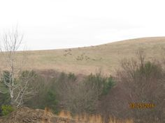 A herd of Elk on the hill!
