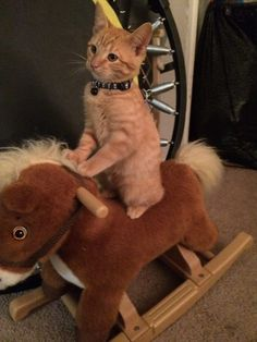 Giddy Up!!
