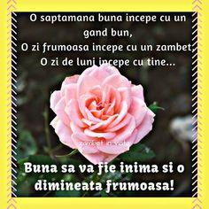 O Zi Frumoasa Imagini Buna Dimineata 273 - BunaDimineataImagini.ro