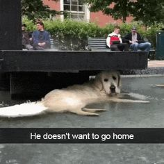 He Doesn't Want To Go Home