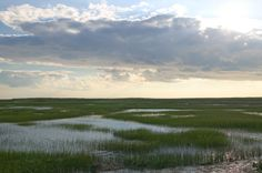 marsh and pluff mud when the water leaves