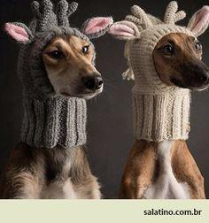 Italian Greyhound reindeer  #dog #salatino #clubesalatino #canil #perro #dogs #cute #love #nature #animales #dog #ilovemydog #ilovemypet #cute #galgos #greyhound #galgoespanhol #galgo