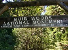 Muir Woods' statuesque redwood trees are considered to be a national treasure, and the tallest living thing in the entire world. Here's how to see them.