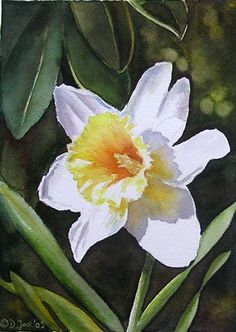 Watercolor Daffodil by Doris Joa
