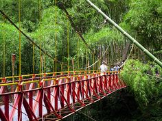 Colombia: The Coffee Park ~ This is the bridge that crosses the northern part of the park to the south.~~~~~~The park is located in coffee Montenegro (Quindio), has many gardens, a roller coaster with more attractions for children, and those who like to know the Nature of coffee, with a guide showing the route of manufacture there is also a cable car, and it is certainly a good idea for families who like to share the outdoors.