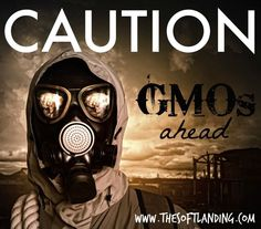 Worried about the dangers of consuming GMOs and their environmental and global impacts? You should be! Find out why.