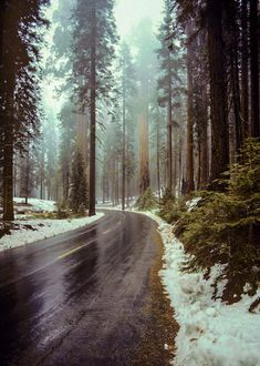 Sequoia National Park (California) by Matthew Metcalf cr.☔️