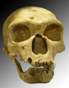 New and more complete genome sequences from Neanderthals and Denisovans show that they both not only interbred with modern humans, but with another, previously unknown archaic human species.  http://www.archaeology.org/news/1536-131119-neanderthal-denisovans-genome