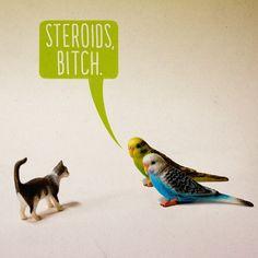 Steroids, bitch.