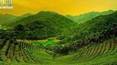 Munnar – Kerala