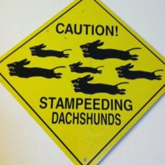lol dachshunds