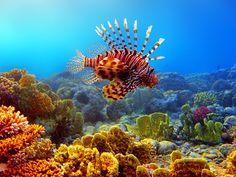 Ägypten Unterwasserwelt im Ägypten Reiseführer http://www.abenteurer.net/2362-aegypten-reisefuehrer/