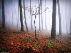 Fotografias lindas de uma floresta sombria! www.conexaofotografica.com.br/floresta-mistica-na-espanha/