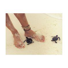 sea turtles, sand, feet ❤ liked on Polyvore