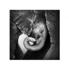 Tableau photo décoration Elephant