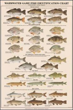Fish fishing and graphics fairy on pinterest for Fish 2 flirt