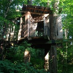 Incredible Treehouses You'll Definitely Want to Stay In