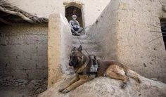 Military working dog and Handler..brave Warriors..