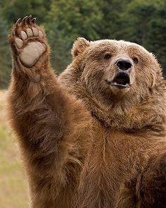 """Heyi guys, wait for me!"" via Animal Doing People Things"