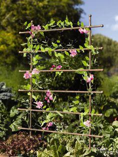 Jardin Ladder Trellis: Gardenista