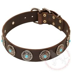Buy Wide Leather Cane Corso Collar Blue Stones Walking