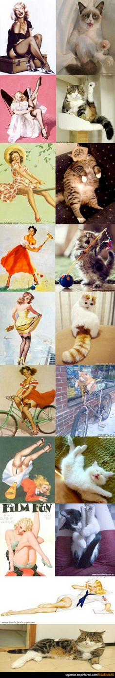 Pinups vs cats lol