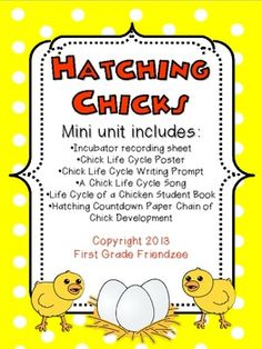 Hatching Chicks - A Chick Life Cycle Mini-Unit for First Grade Science Chicken Life, Fresh Chicken, Chicken Eggs, Hatching Chickens, Daycare Themes, First Grade Science, Urban Chickens, Paper Chains, Original Song