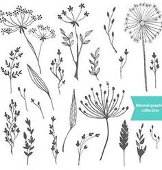 Beautiful color grass silhouette collection vector 4290873 - by Elmiko on VectorStock®