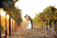 Silver Horse Winery Wedding 37 copy 1024x682 Sean & Randis Vineyard Red & Grey Wedding