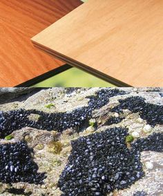 Mussels inspire plywood adhesives.    Nature-Inspired Innovation: 9 Examples of Biomimicry in Action : Page 8 : TreeHugger
