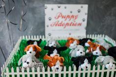 pups-to-adopt