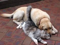 Dogs Love Cats Cat And Dog Love by Miramarra8
