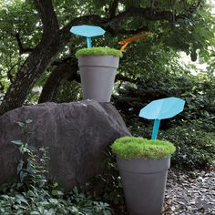 ReLEAF Rainwater Collector