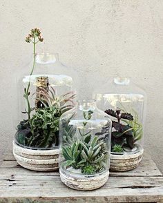 succulents from house beautiful | Brooke Howsley, Floral Designer
