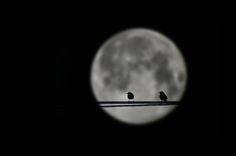 Alone in front of the moon by Marco Calandra on 500px