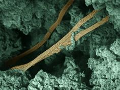 What are archaea? Examples of archaea, images of archaea, definition of archaea vs.