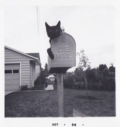 Cat on mailbox