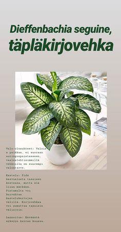 Tarinat • Instagram Plant Identification, Cactus Plants, Planting Flowers, Instagram, Cacti, Cactus