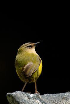 Sea Birds, Wild Birds, Flightless Bird, Superfamily, Bird Watching, Long Legs, Beautiful Birds, New Zealand, Wildlife