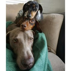 And you get a dog on your head....and you get a dog on your head.... by harlowandsage