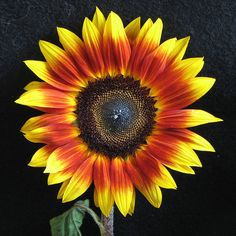 love this sunflower