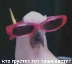 excuse u, im done with ur crap, bye felicia Cat Memes, Dankest Memes, Funny Memes, Reaction Pictures, Funny Pictures, Hello Memes, Happy Memes, Russian Memes, Love Post