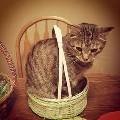 Happy Easter, heres a cat! If I fits I sits!!