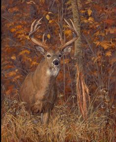 Original Oil Painting Whitetail Deer Ryan Kirby
