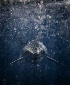 Stunning shark swimming