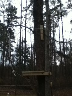 We got a zip line in our backyard!