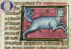 Оnocentaurus (ass-centaur)   Thomas of Cantimpré, Liber de natura rerum, France ca. 1290.  Valenciennes, Bibliothèque municipale, ms. 320, fol. 73v