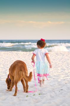 """Dog Friendly Beaches Dog Friendly Beaches - Pet Friendly Info - Cape San Blas allows dogs ANY time! Cape San Blas is one of the true """"dog beaches"""" in FL!"""
