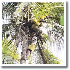 Kokosöl - erfahre mehr darüber!